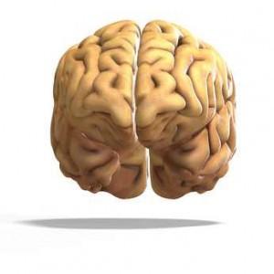Das Gehirn teilt sich in zwei Hemisphären